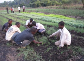 Orphans weed the nursery beds